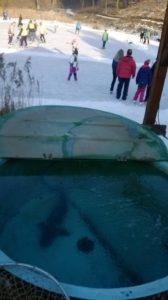 Sádky v zimě, bruslení